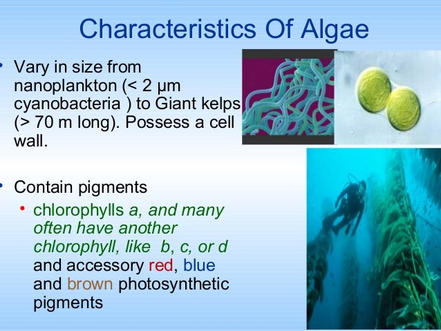 chlorophyll a extraction in marine phytoplankton pdf