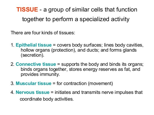 animal tissues and their functions and location pdf