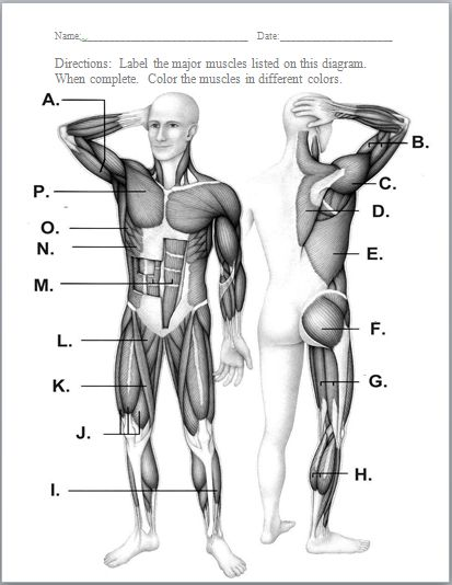 all systems in human body pdf