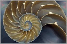 application of mathematics in nature